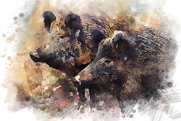 Wildschwein-Zeichnung
